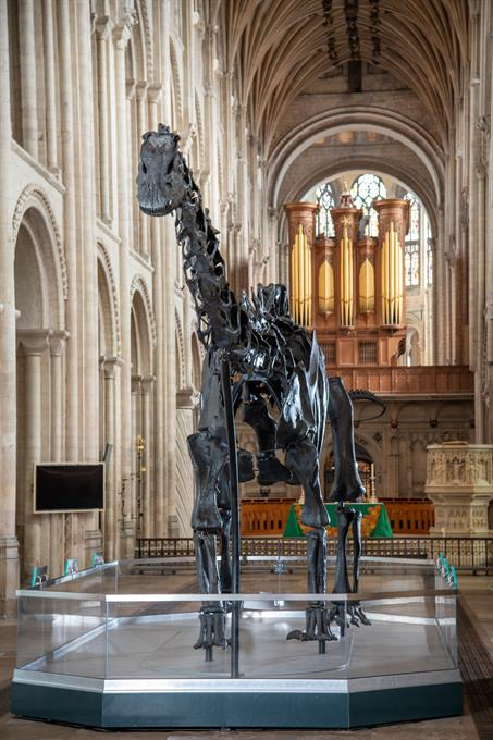 Dippy at Norwich Cathedral